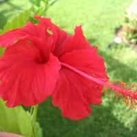 Cozumel flower